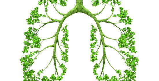 BPOC tratamente naturiste si remedii