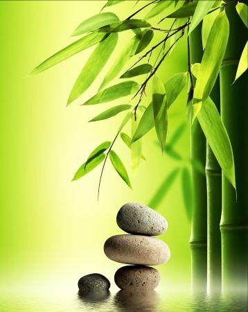 Remedii Naturiste Pentru Boli de Rinichi