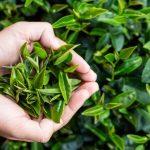 Plante care ajuta la slabit