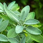 Remedii naturiste Alzheimer