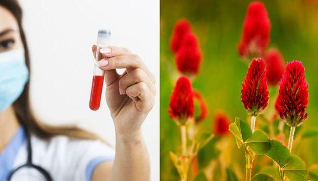 Plante pentru curatarea sangelui
