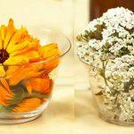 Plante medicinale pentru arsuri stomacale