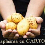 Catplasma cu cartofi