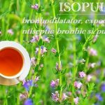 Ceai de isop - infectii bronhice si pulmonare