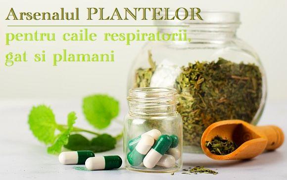Plante pentru tuse, gat, nas si raceli
