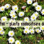 Banutei plante comestibile si medicinale