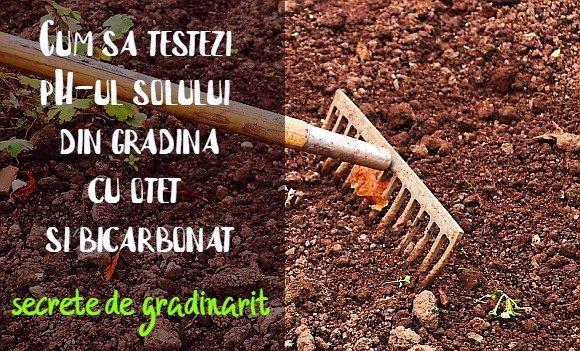 Cum sa testezi pH-ul solului