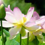 Rugaciune pentru pacea sufletului