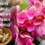 Solutie cu usturoi pentru inflorirea orhideelor