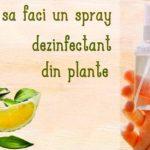 Spray dezinfectant din plante