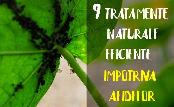 Tratamente naturale afide