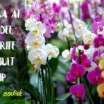 Cum sa ai orhidee inflorite mai mult timp