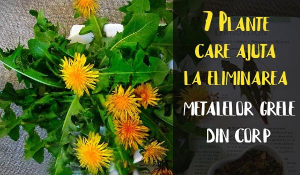 Plante care ajuta la eliminarea metalelor grele din corp