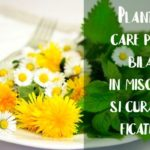 Plante care pun bila in miscare
