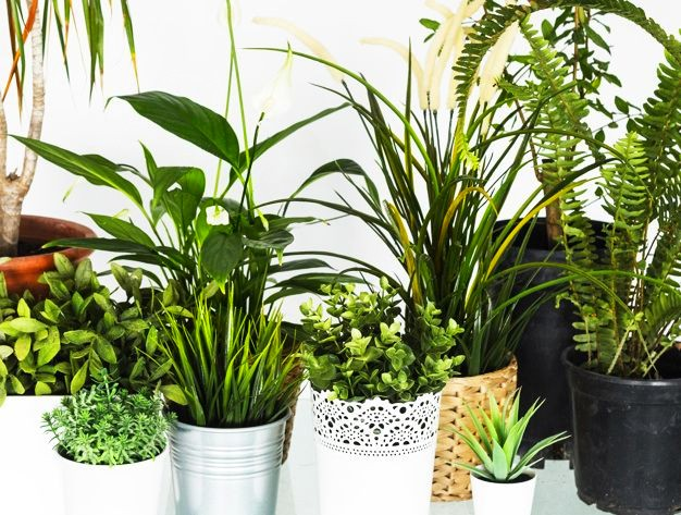 Plante care purifica aerul de toxine