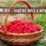 Zmeura aspirina naturii