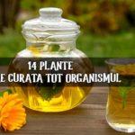 14 plante care detoxifica organismul