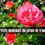 7 retete medicinale din trandafir