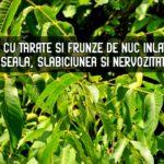 Bai cu tarate si frunze de nuc