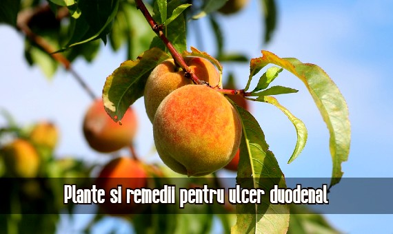 Plante si remedii pentru ulcer duodenal
