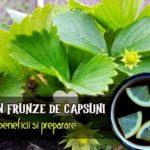 Ceai de frunze de capsuni beneficii si preparare