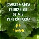Conservarea frunzelor de vie pentru iarna
