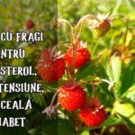 Cura cu fragi pentru colesterol, tensiune, diabet