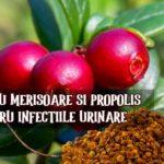 Cura cu merisoare si propolis pentru infectiile urinare