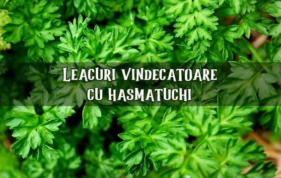 Hasmatuchi - proprietati si leacuri
