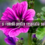 Remedii resRespirație grea, dificilă – 3 plante care ajută Sursa: https://lataifas.ro/boli-si-tratamente-naturiste/29811/respiratie-grea-dificila-remedii-naturiste/piratie suieratoare