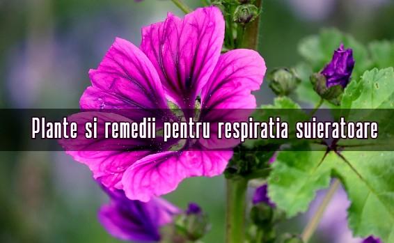 Remedii respiratie suieratoare