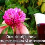 Otet de trifoi rosu pentru menopauza si osteoporoza
