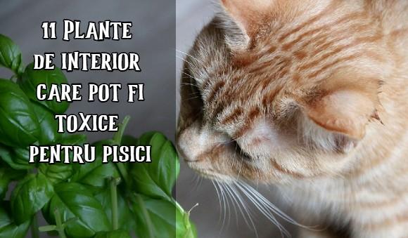 Plante de interior toxice pentru pisici