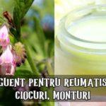 Unguent pentru reumatism, ciocuri, monturi