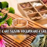 5 plante care sustin recuperarea organismului
