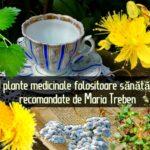 9 plante medicinale folositoare sanatatii