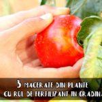 Macerate de plante pentru gradina