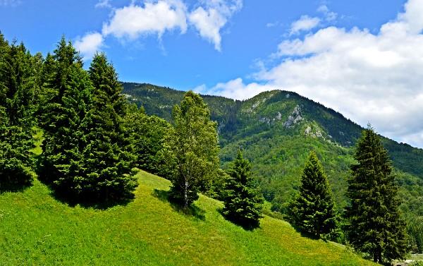 Vacanta la munte.jpg