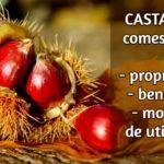 Castanele comestibile - în ce boli ajută și cum se consumă