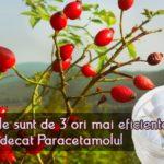Macesele sunt de 3 ori mai eficiente decat Paracetamolul