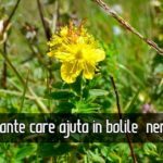 3 plante care ajuta in bolile nervoase