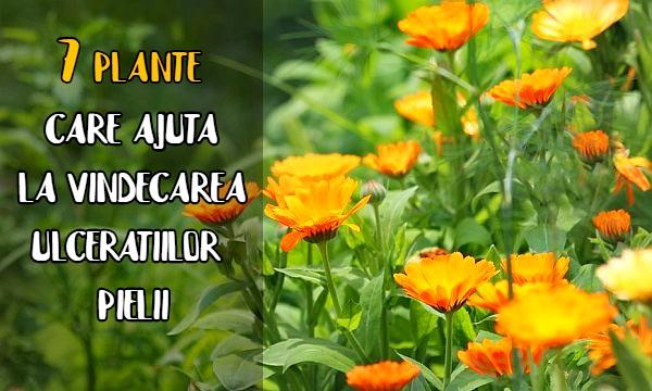 7 plante pentru ulceratiile pielii