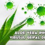 Aloe vera inihiba virusul gripal A