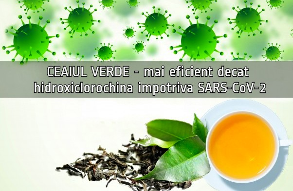 Ceaiul verde mai eficient decat hidroxiclororchina impotriva SARS-CoV-2