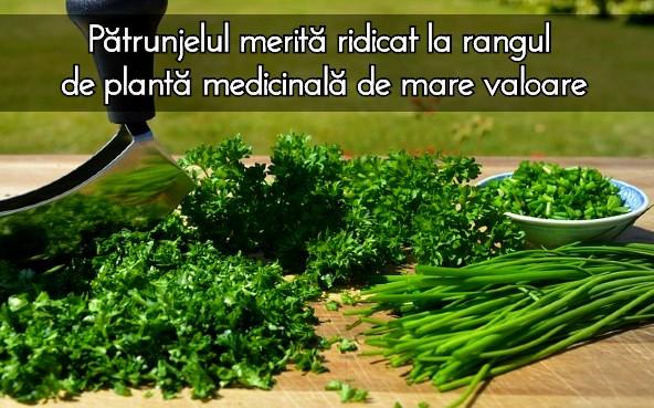 Patrunjelul - o planta medicinala de mare valoare