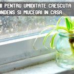 Solutii pentru umiditate crescuta, condes si mucegai in casa
