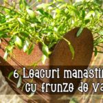 6 Leacuri manastiresti cu frunze de vasc