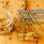 Coada-soricelului in medicina casei