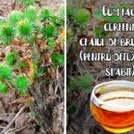Cum fac coreeni ceaiul de brusture (pentru detoxifiere, slabit)