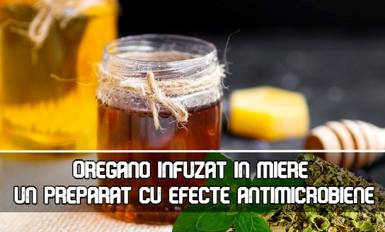 Oregano infuzat in miere - un preparat cu proprietati antimicrobiene